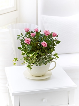 Picture of Chic Pink Rose Teacup