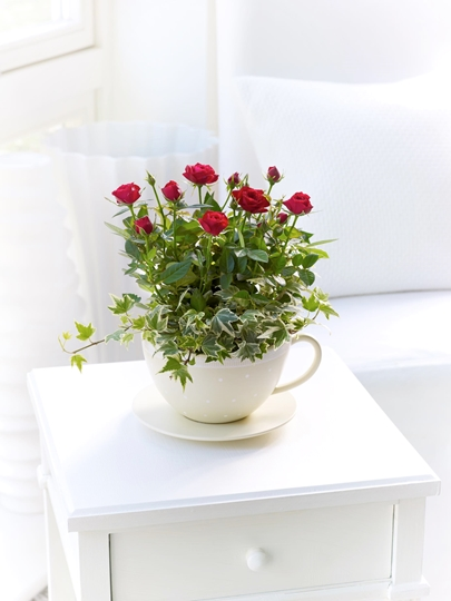 Picture of Chic Red Rose Teacup