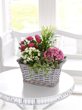 Picture of Mixed Planted Basket