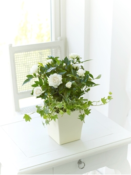 Picture of Rose and Ivy Sympathy Arrangement