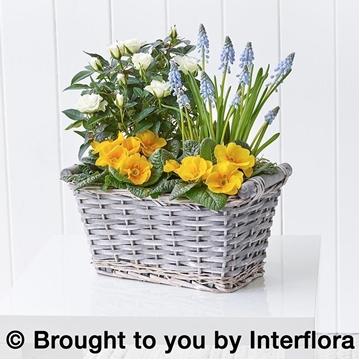 Picture of Sunny Skies Planted Basket