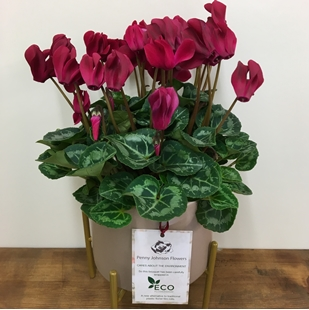 Picture for category BOTANICAL RANGE