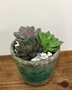 Picture of Trio Echevaria Planter