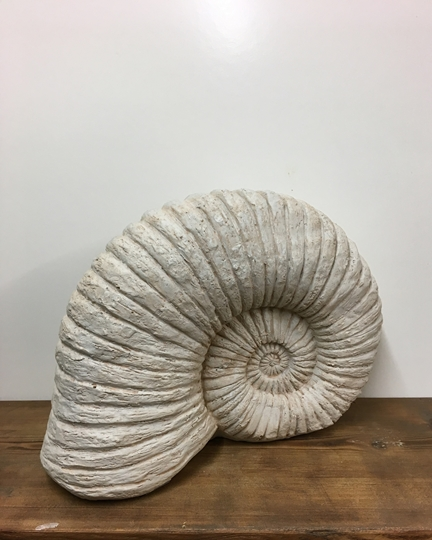 Picture of Large Ammonite Shell Decoration