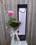 Picture of Single Pink Rose In Vase