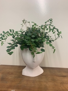 Picture of White Face Planter