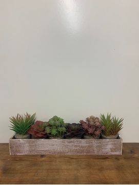 Picture of Set of 6 Assorted Succulents in Pots Displayed in Long Wooden Box