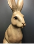 Picture of Large Hare