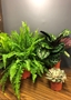 Picture of house plant selection