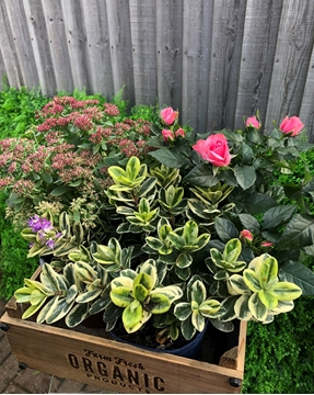 Picture of OUTDOOR PLANT SELECTION