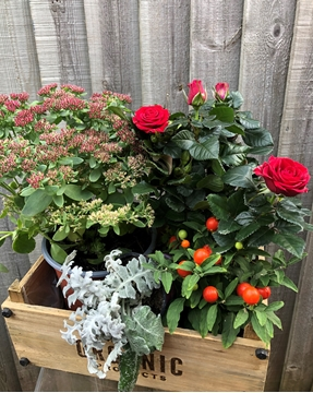 Picture of WINTER PLANT SELECTION