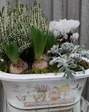 Picture of Winter White Planter