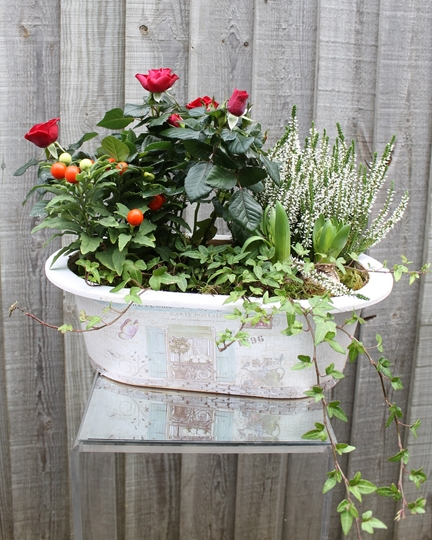 Picture of Winter Rose Planter