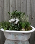 Picture of Winter Frost Planter
