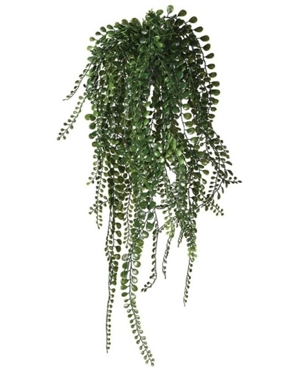 Picture of Pea Leaf Hanging Plant