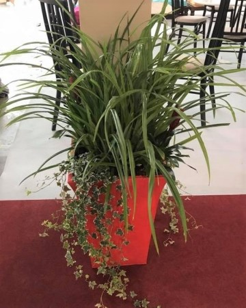 Planter For Furniture Show Nation Exhibition Centre  NEC Birmingham
