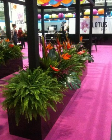 Fern And Guzmania Planted Trough