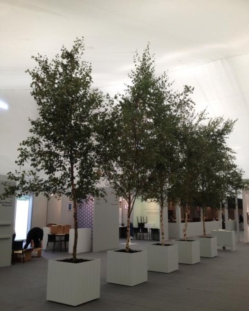 Planted Tree Displays