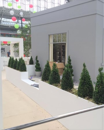 Buxus Planted Feature - Olympia London